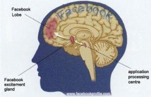 Facebooked Brain